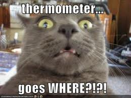 cat thermometer
