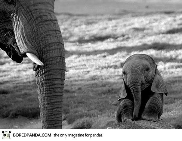 cute-baby-animals-33