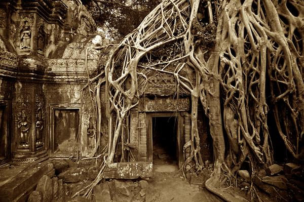 iconic-ta-prahm-temple-photography_51462_600x450